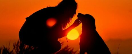 person petting a dog with sunset behind